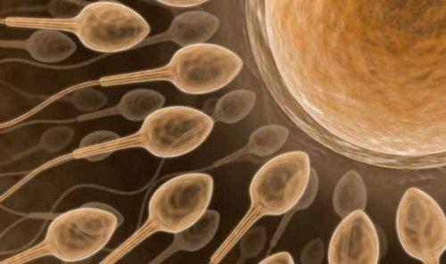 clinicas-de-fertilidad-en-murcia