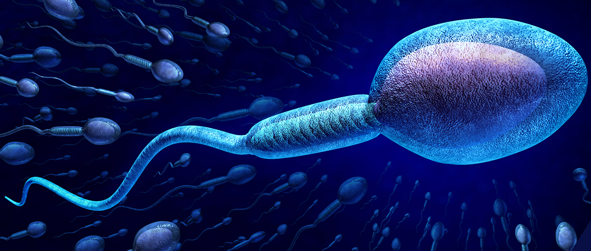 espermatozoide-cabeza